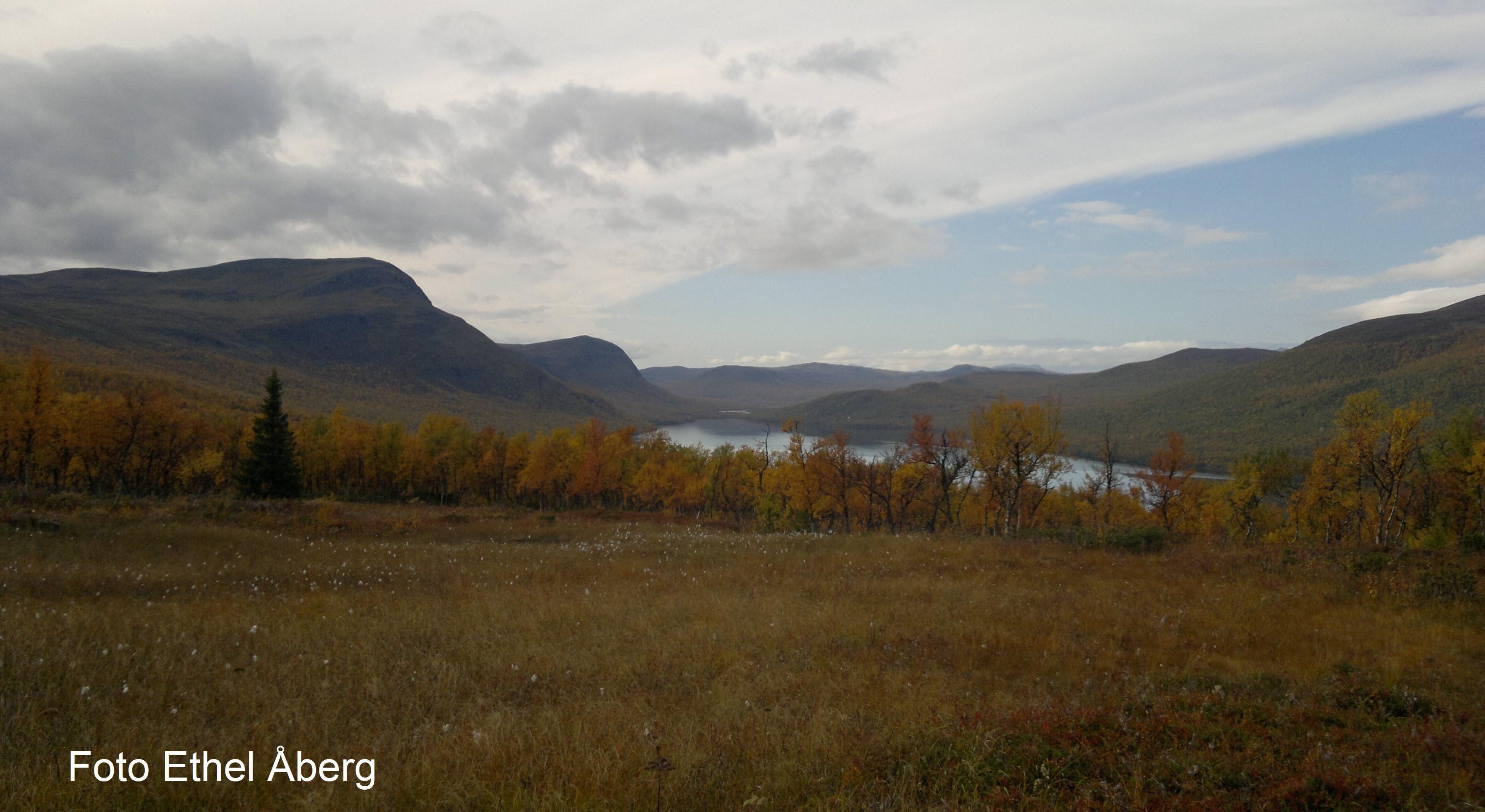 Ammarnäs tvådagars guidad vandringstur i Vindelfjällens naturreservat