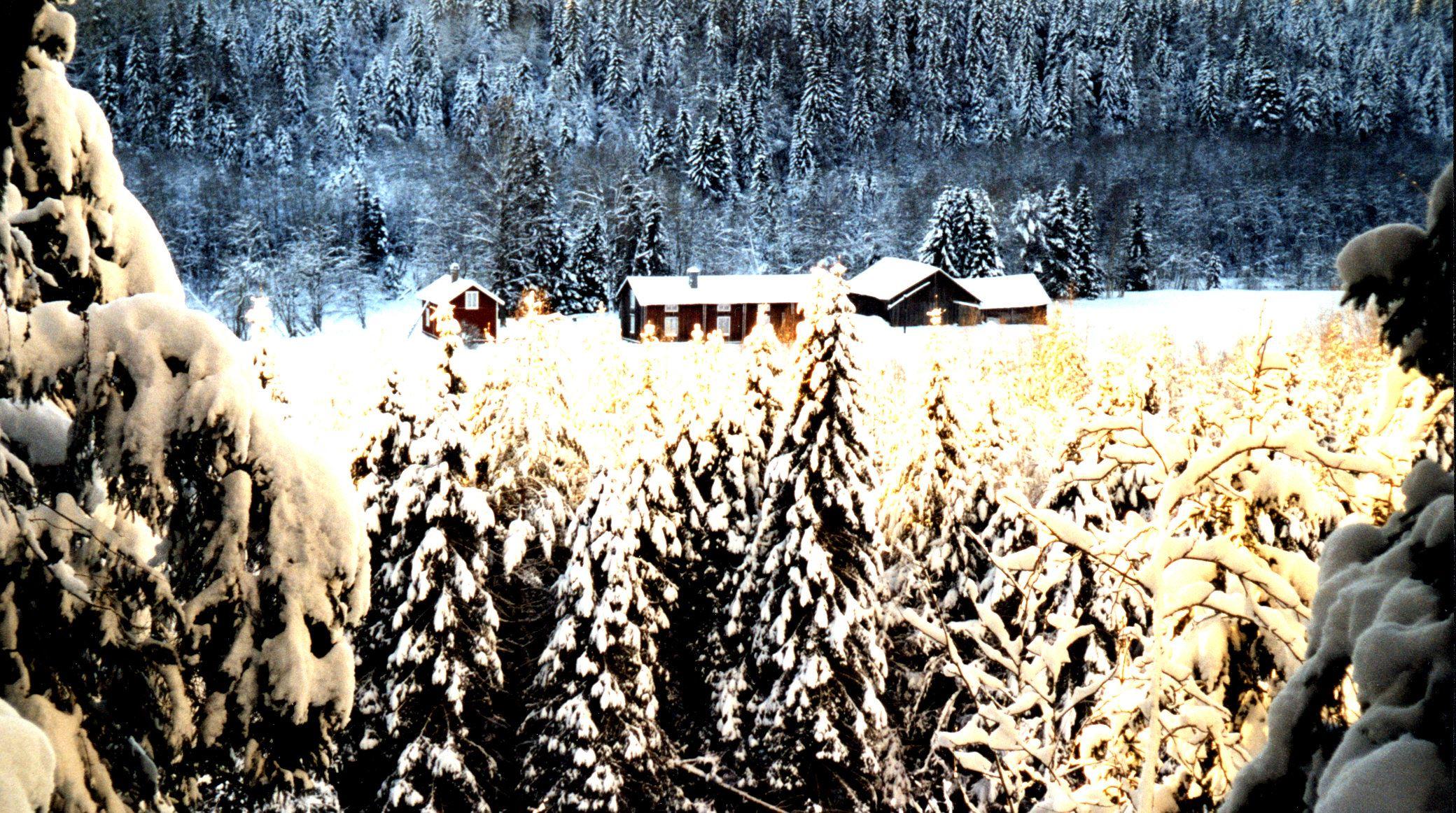 © Tjarn Rekration & Upplevelser, Tjarn i vinterskrud