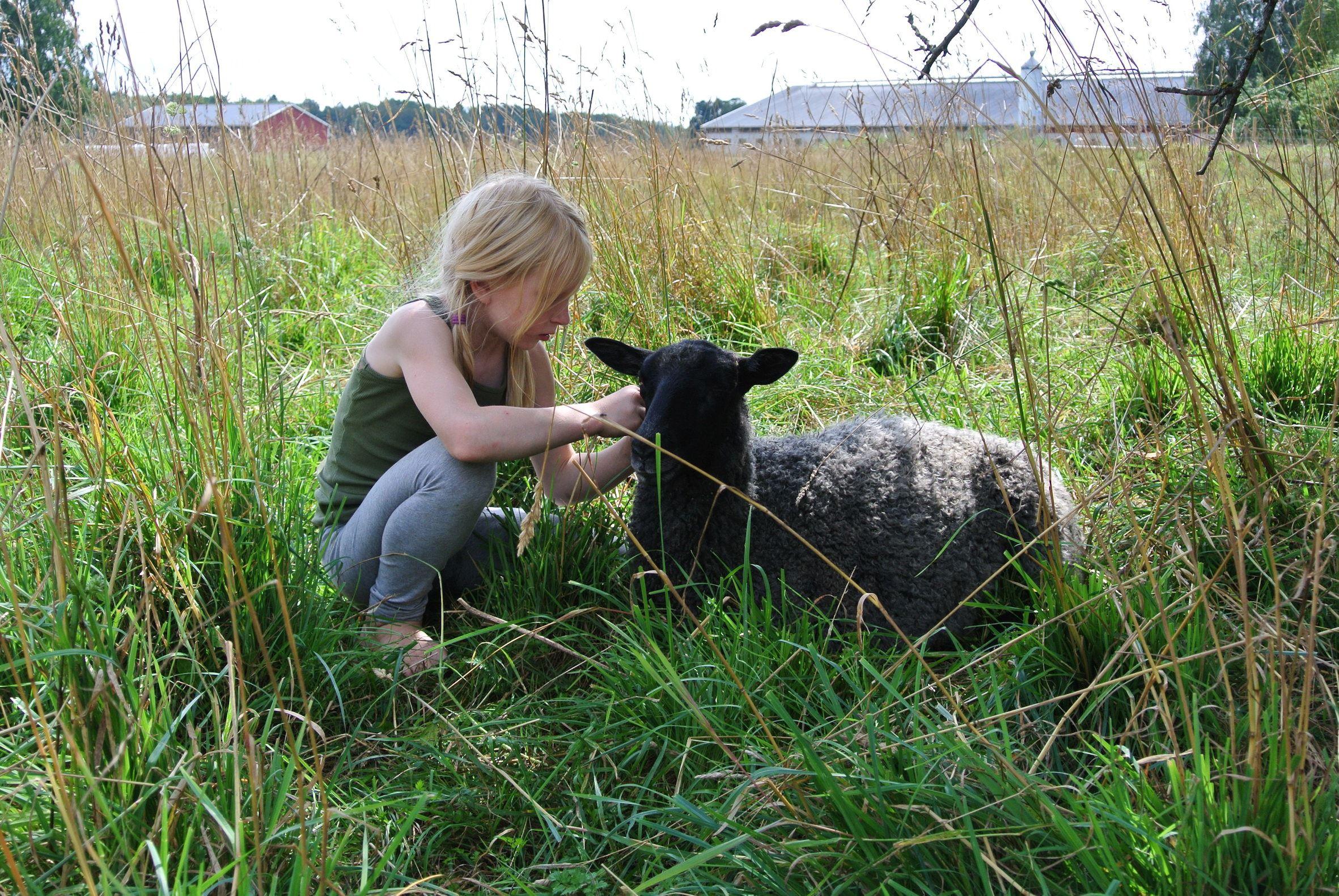 Riquette Verschoor,  © Lanthotell Lidhem, Får, höns, bi, kanin och mycket mer i trädgården