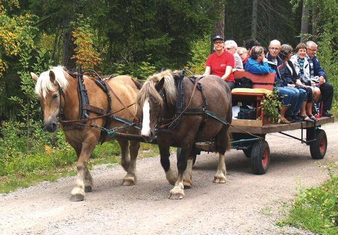 Horses: Horse and carriage or sleigh in Tolg