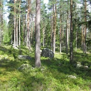 © Per Gustavsson, Länsstyrelsen Dalarna, Naturreservat - Krokbäcken