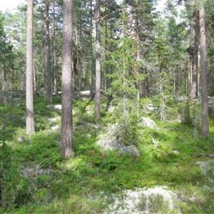 © Per Gustavsson, Länsstyrelsen Dalarna, Nature reserve - Skissen
