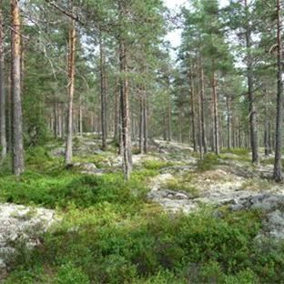 © Per Gustavsson, Länsstyrelsen Dalarna, Nature reserve - Blåberget