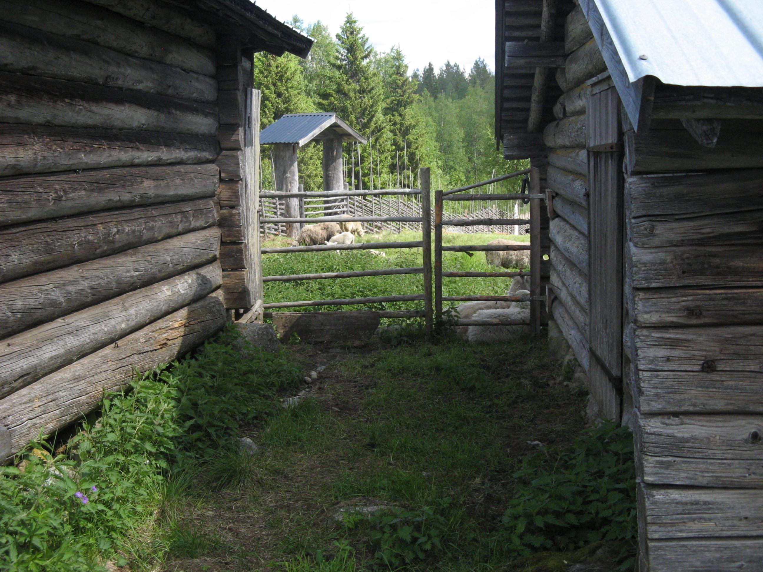 Bo på fäbodvall, Norrigården Gådavallen