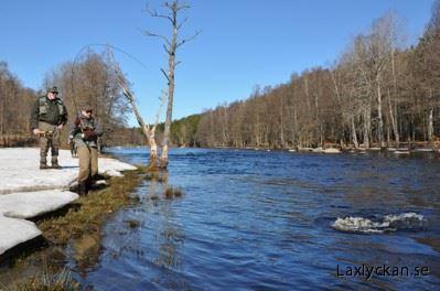 Rotation fishing in river Mörrumsån, March 1-2, 2 nights