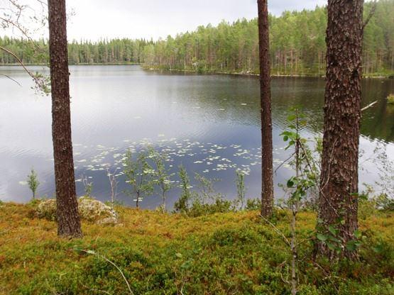 Henrik Sporring,  © Länsstyrelsen Västerbotten, Trehörningens naturreservat