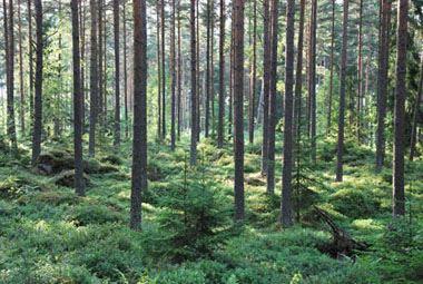 Naturschutzgebiet Fylleryd