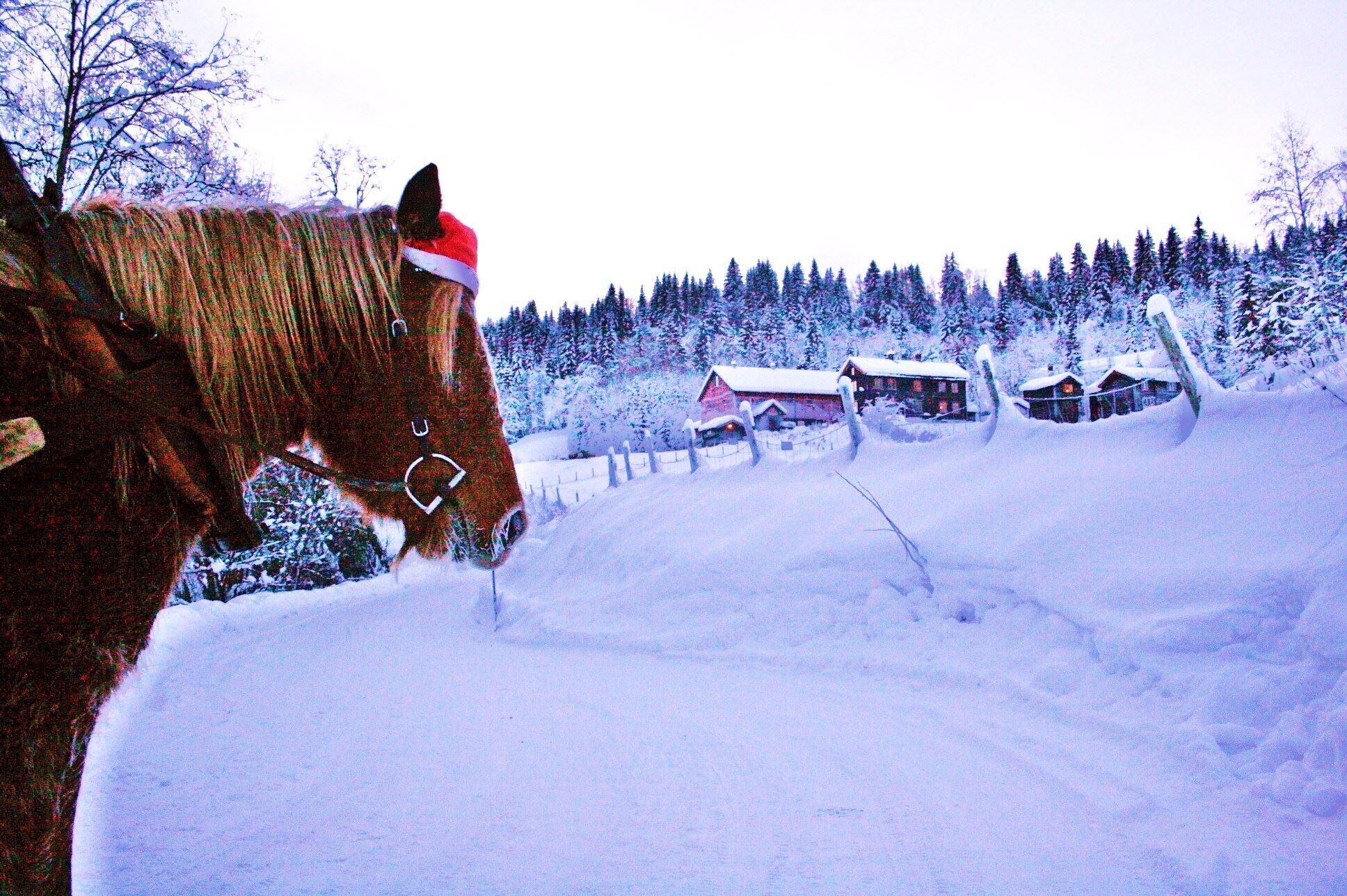 Aktiv gårdsferie og rideleir i vinterferien