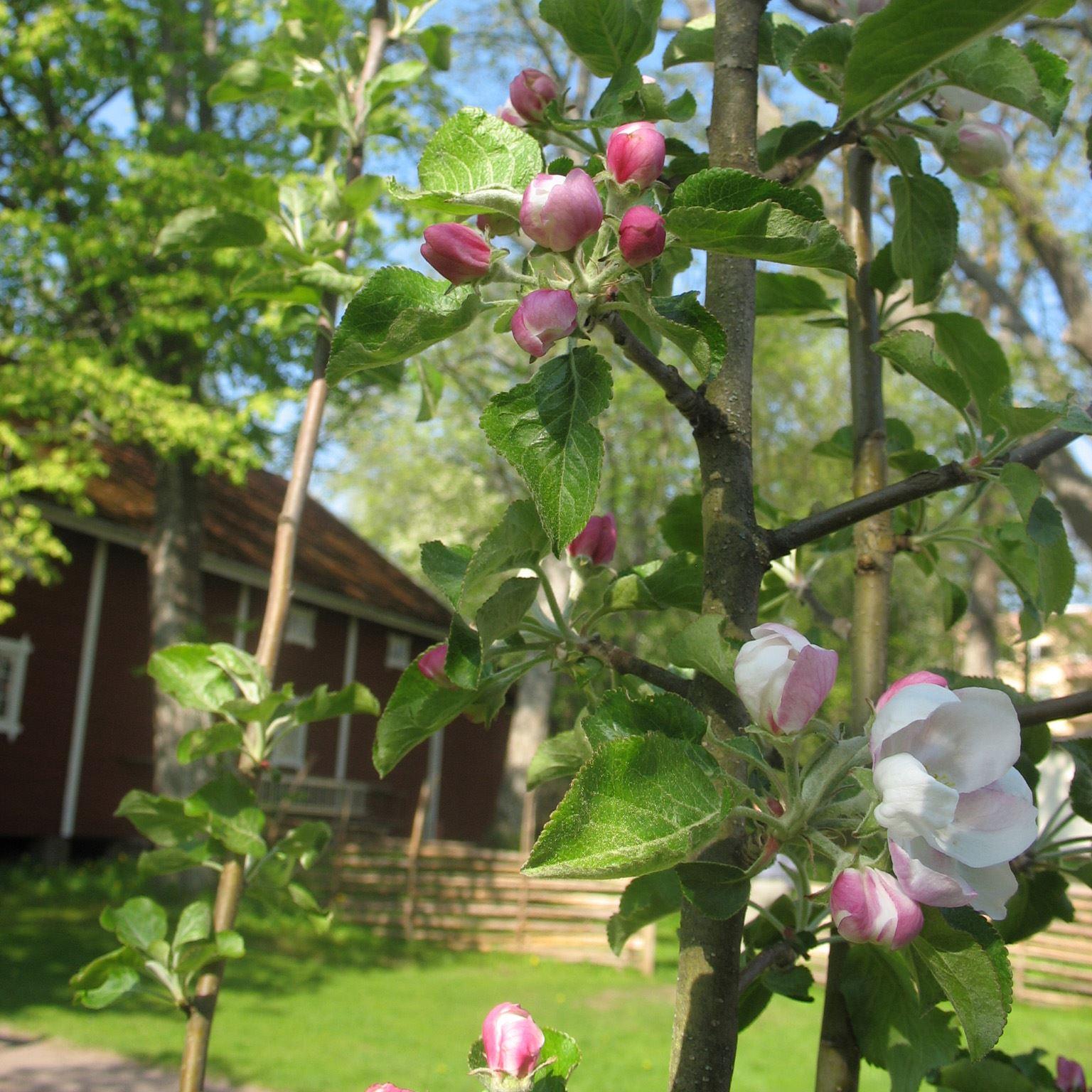 Entré trädgårdarna på Astrid Lindgrens Näs och utställningar