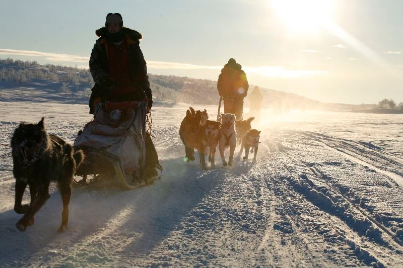 Holmen Husky Lodge The Ultimate Expedition - Dog Sledding