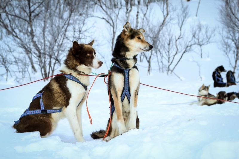 15 Km Afternoon Dogsled Tour