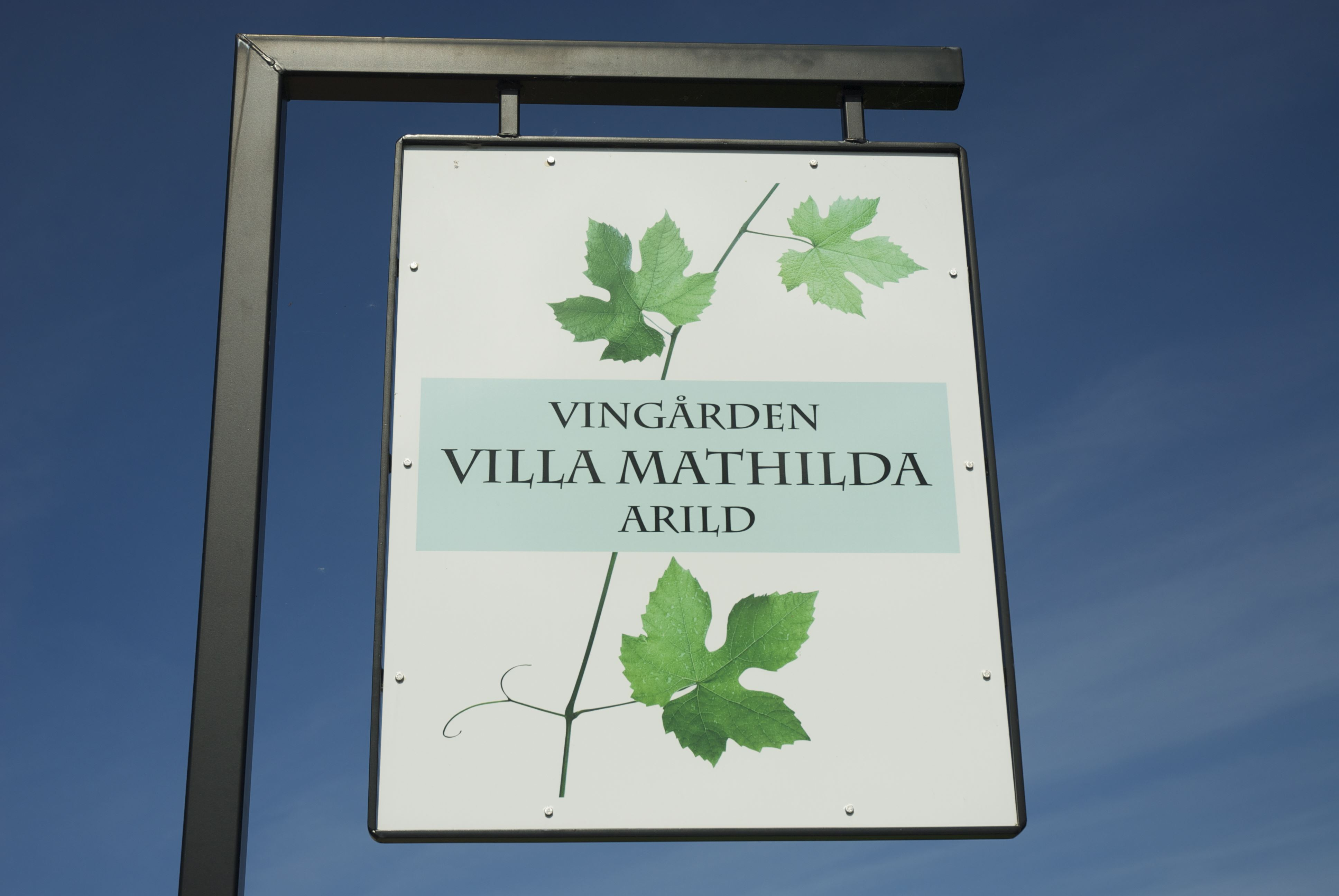 Vingården Villa Mathilda, Vingården Villa Mathilda