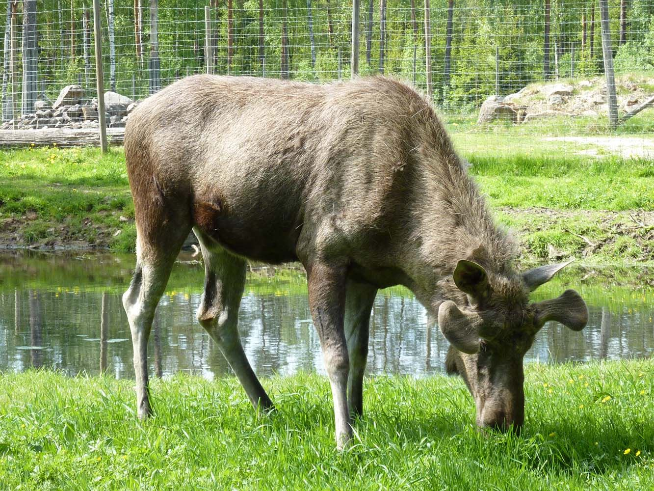 Elinge Elk Park