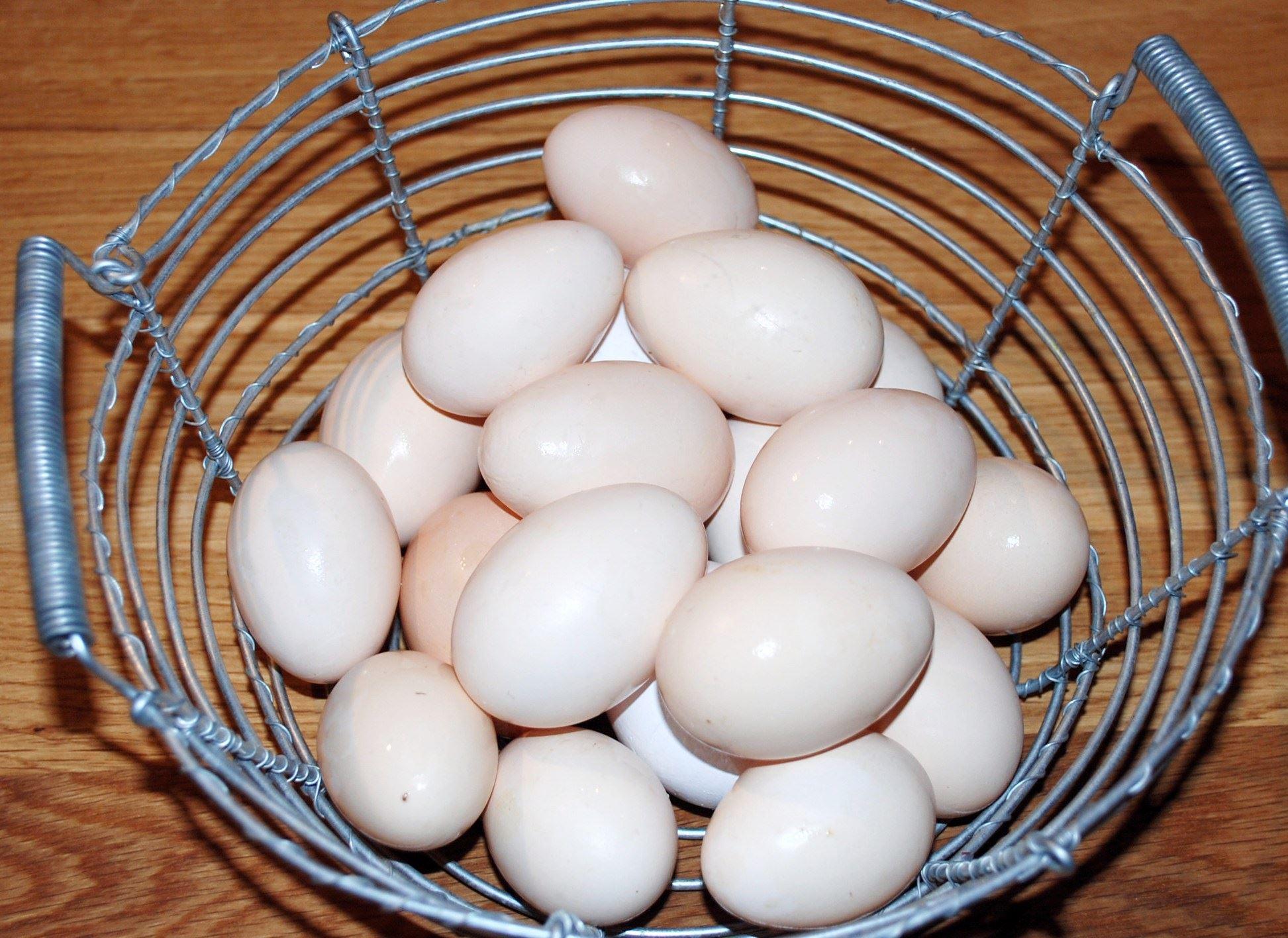 Stefanie Busam Golay , Ägg från gården