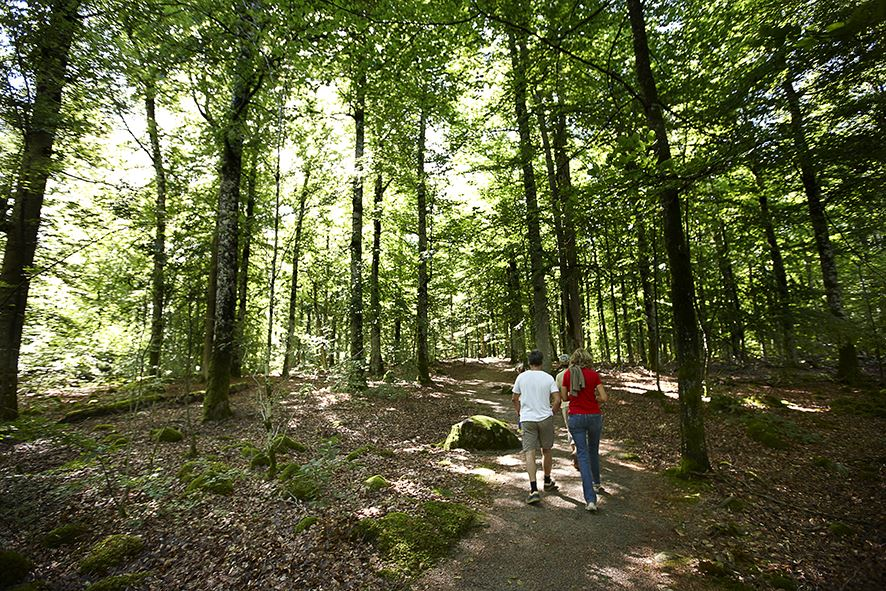 Naturreservat Bjurkärr