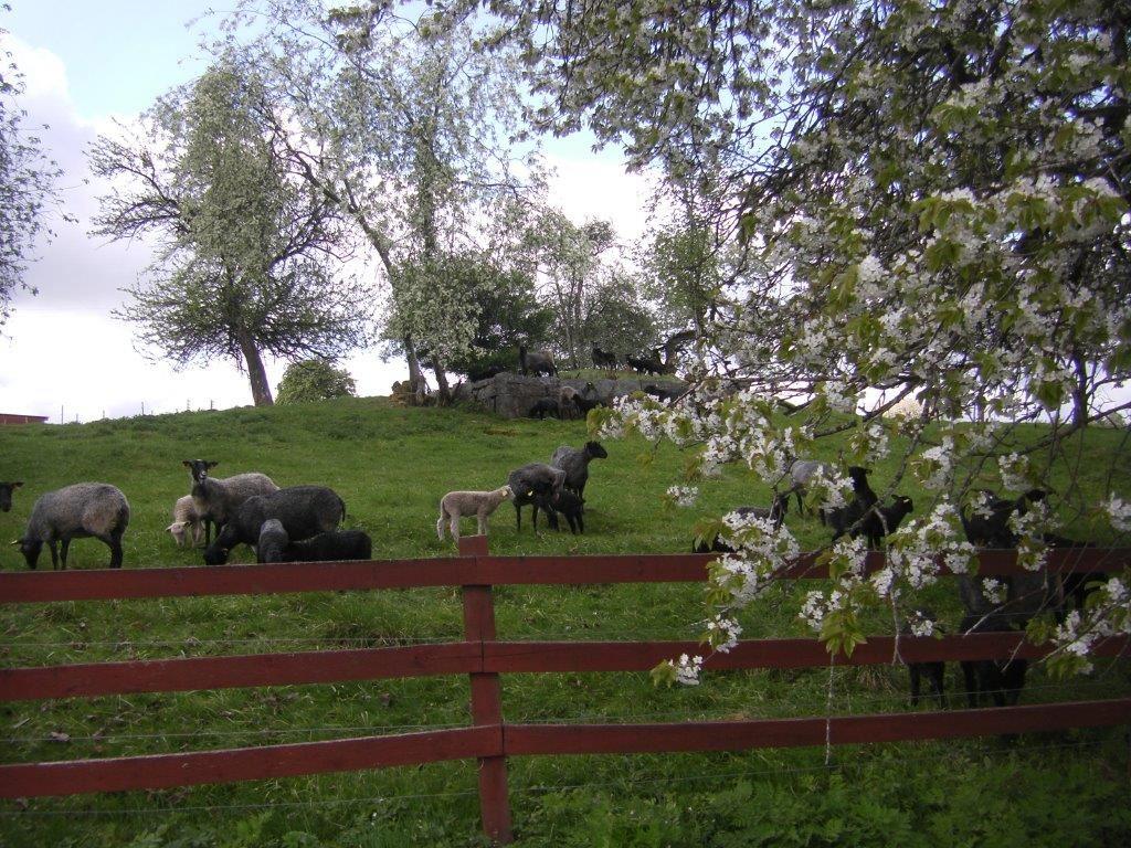 © Erikshester, Danefur, Erikshester gård