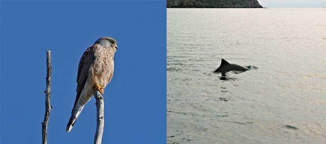 Fåglar och valar i Kullaberg