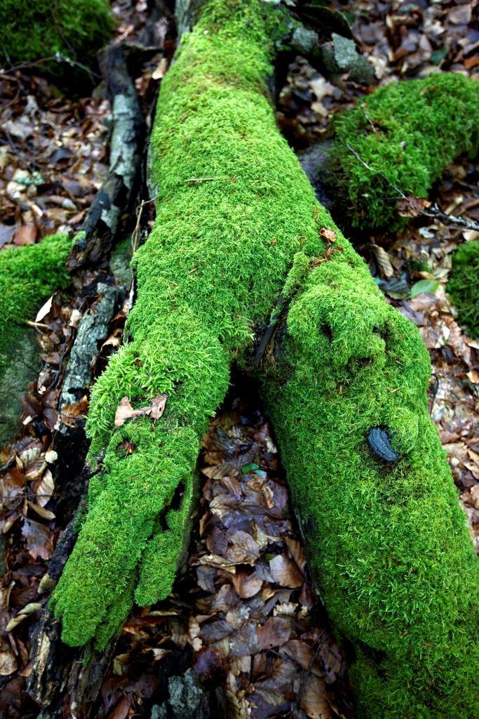 Bjurkärr nature reserv