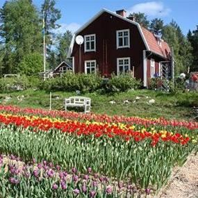 Farm Backsjön
