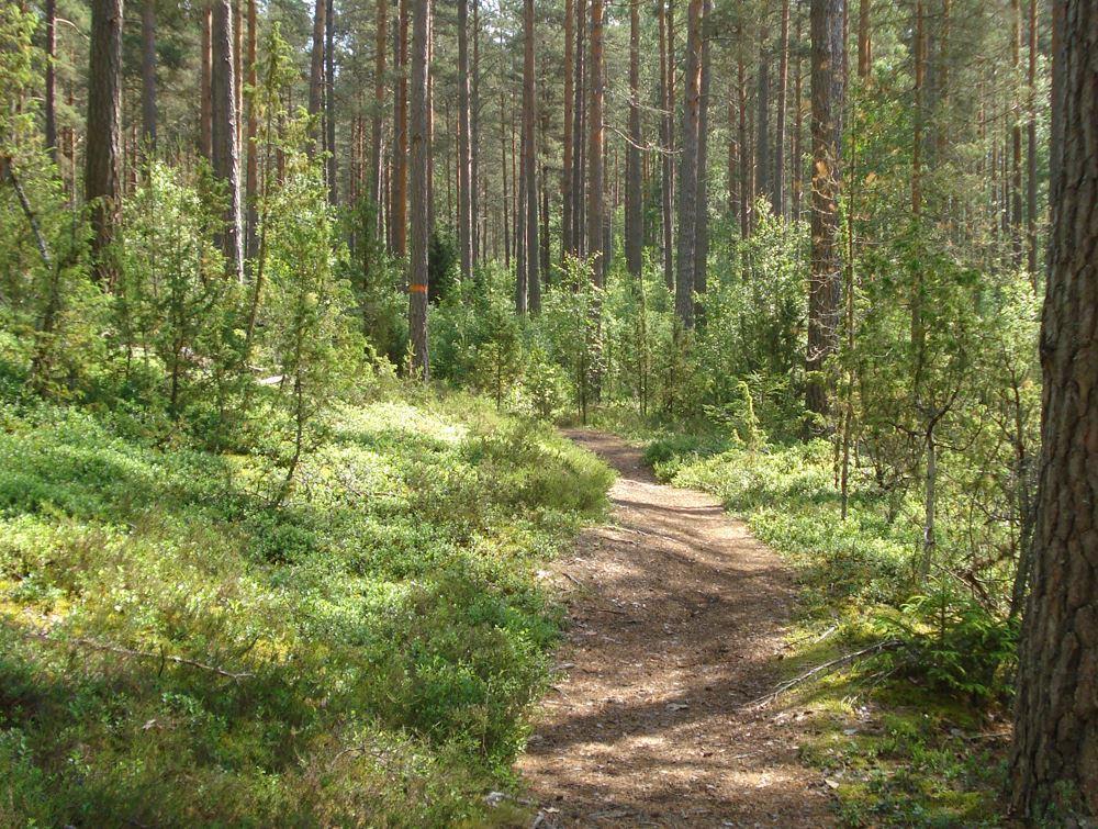 Vandring kring Vimmerby