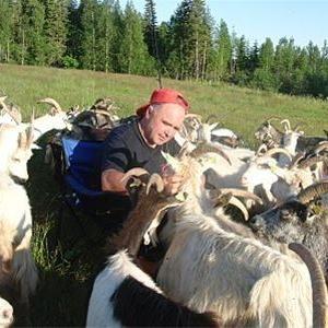 Meåfors goat farm