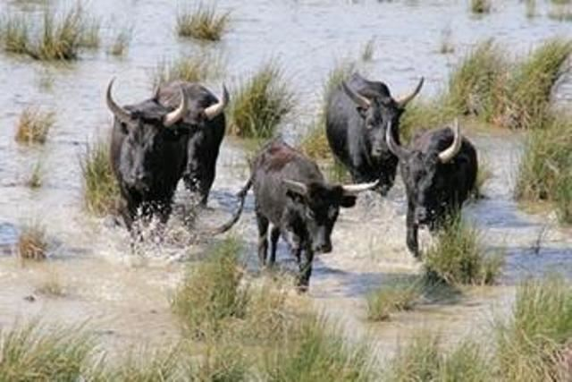 9.EXCURSION LA CAMARGUE SECRETE