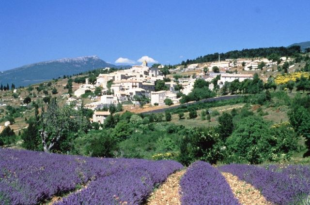 LUBERON AND LAVENDER