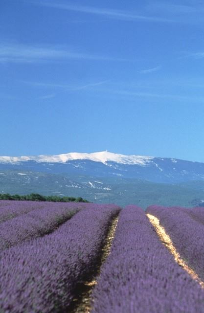 1. EXCURSION LUBERON ET LAVANDES APRES MIDI PM