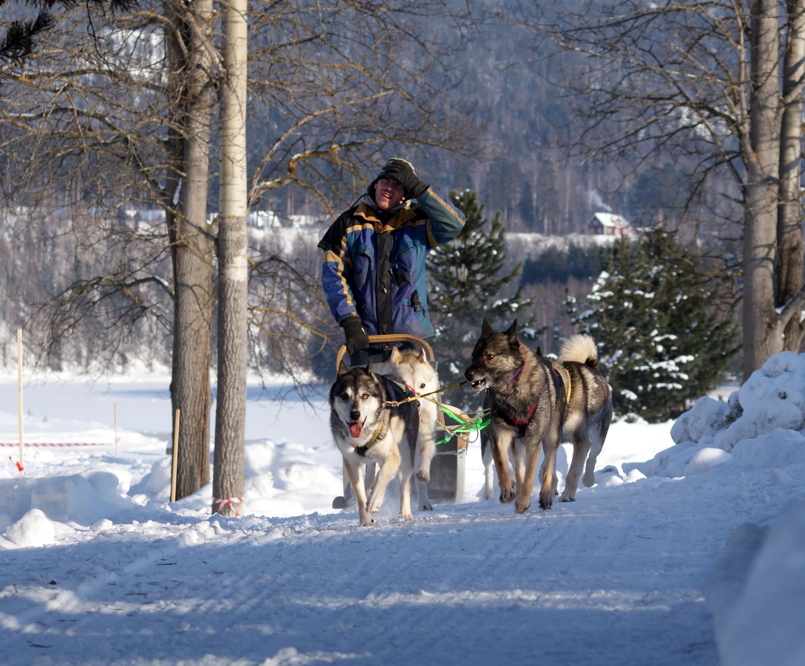 Camilla Eklund, Dogsledding trips in Ådalen