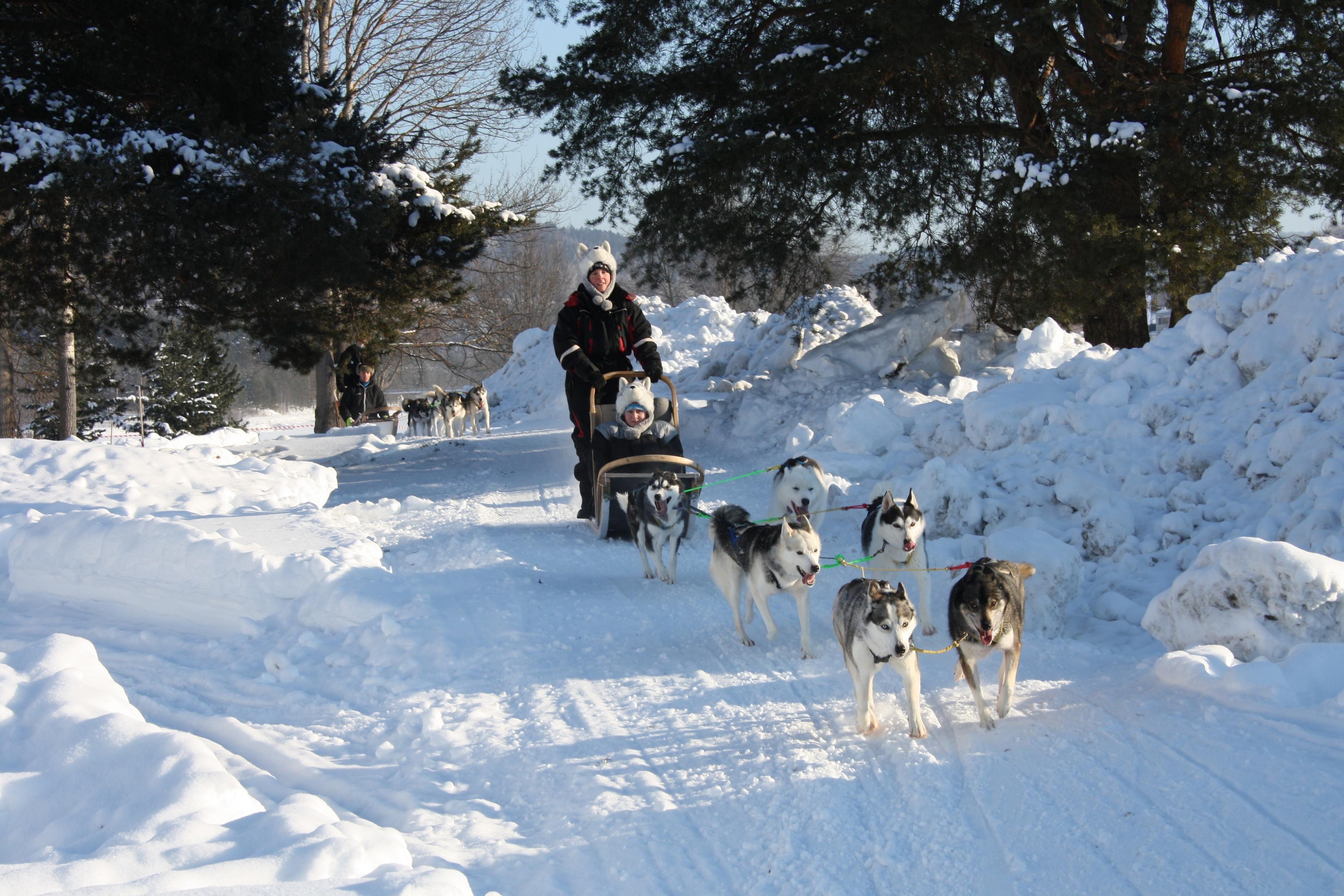 Johanna Hagberg, Dogsledding trips in Ådalen