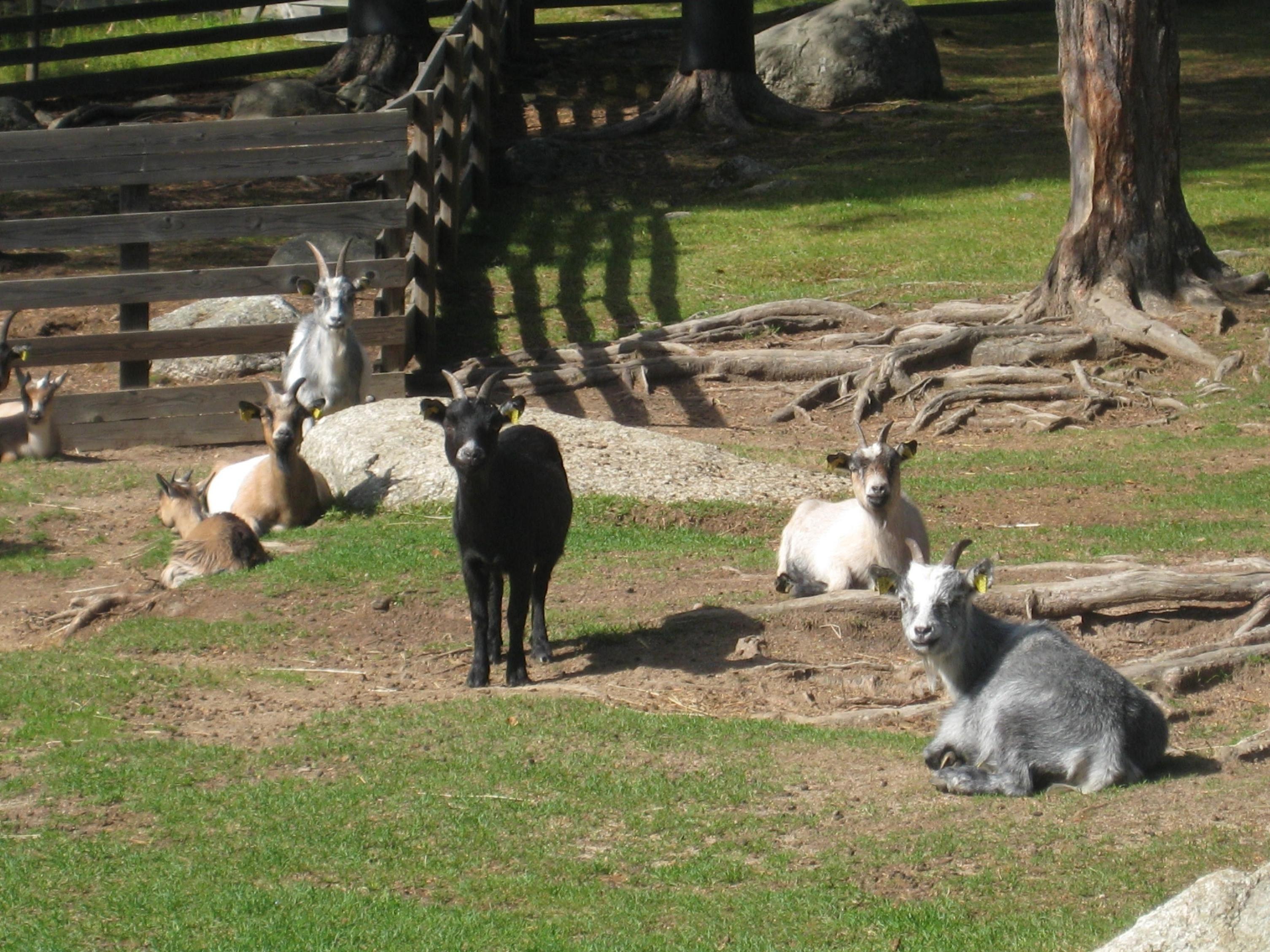 Junsele Djurpark Zoo