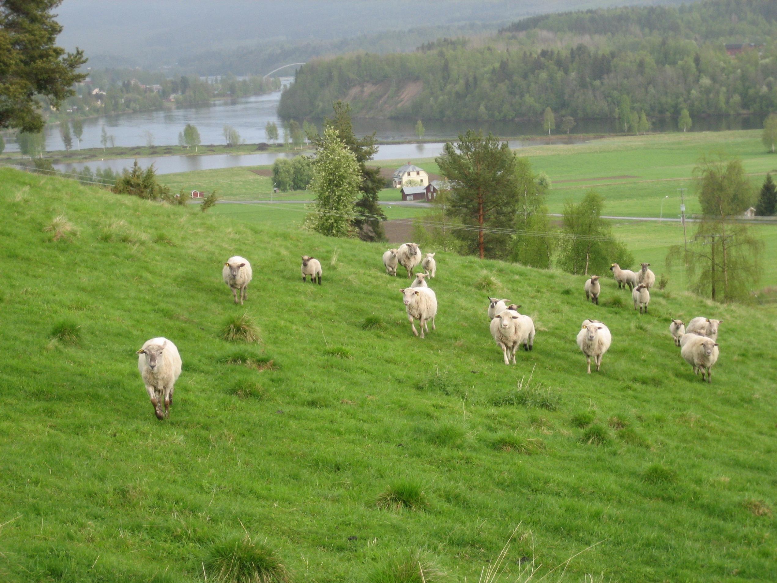 Kåréns Farm