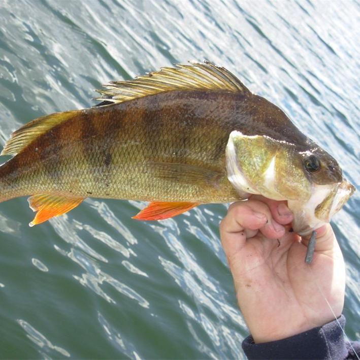 Fiske i Ljustorps fiskevårdsområde