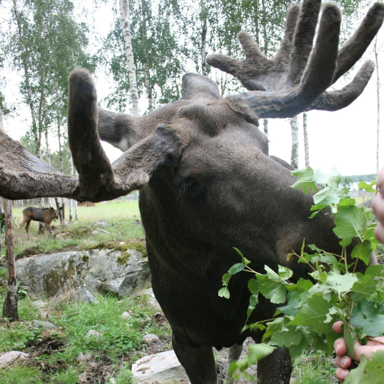 Långshyttans Älgpark