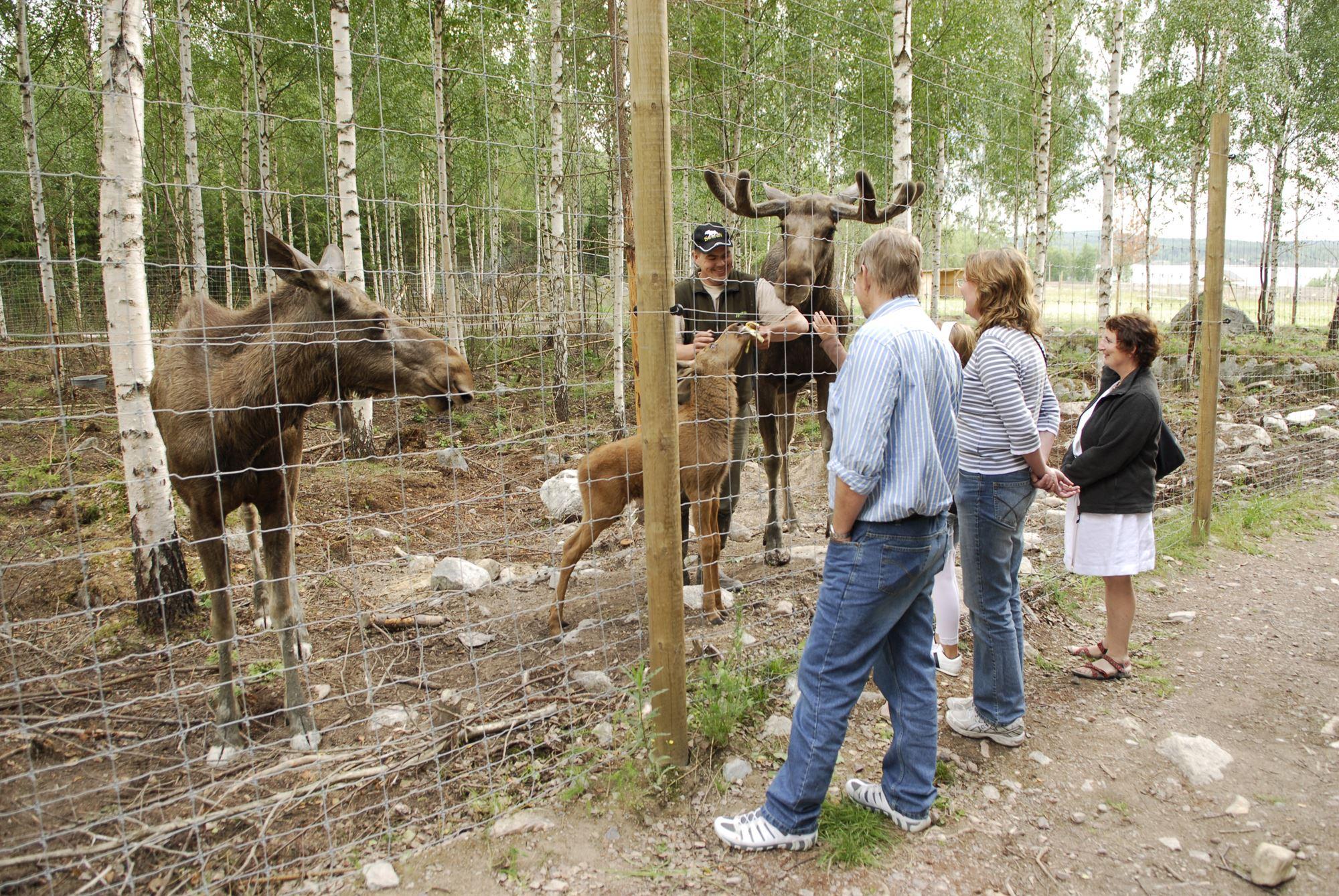 foto: Pia Wallner, Långshyttans Älgpark