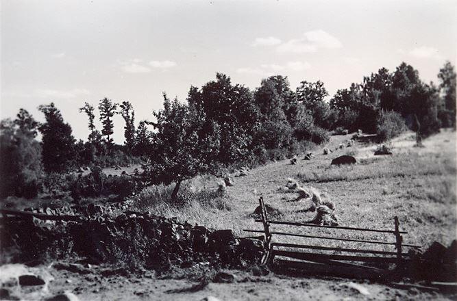 © Simontorp Konsult AB, Auga backe ca 1950