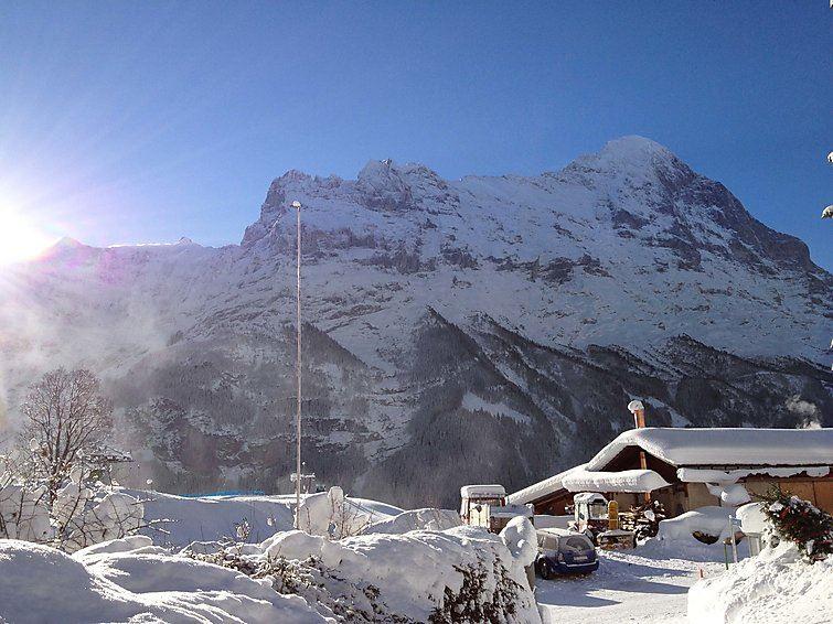 Bergfink Grindelwald