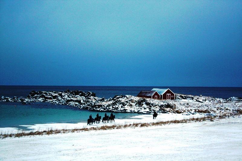 Lofoten til hest - turridning på Islandshest i Lofoten