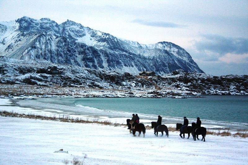 Half Day Tour (4 hours) - Horsebackriding on Icelandic Horses in Lofoten