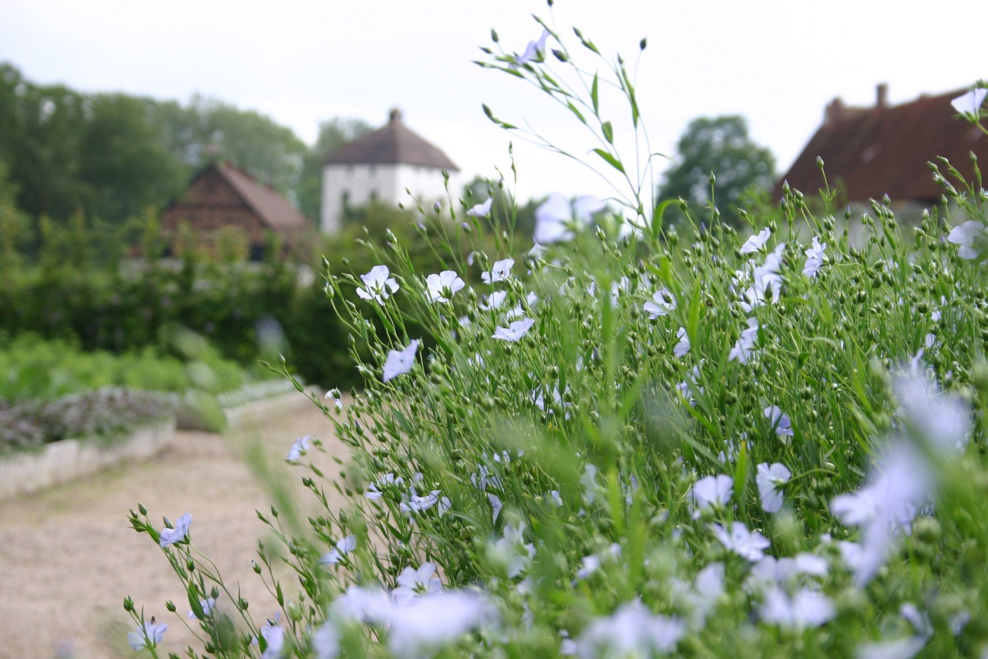 Hovdala slottspark med köksträdgård