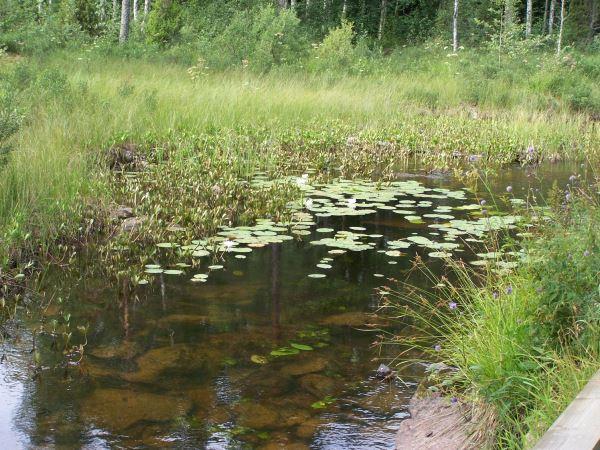 Fiskekort Nittens Fiskevårdsområde