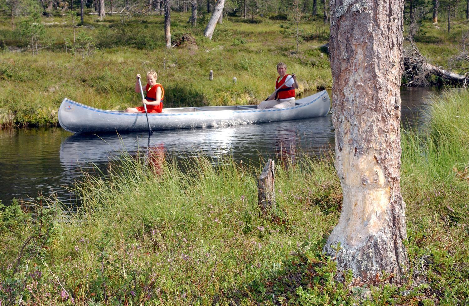 Idre Turistservice, Bäversafari i Idre