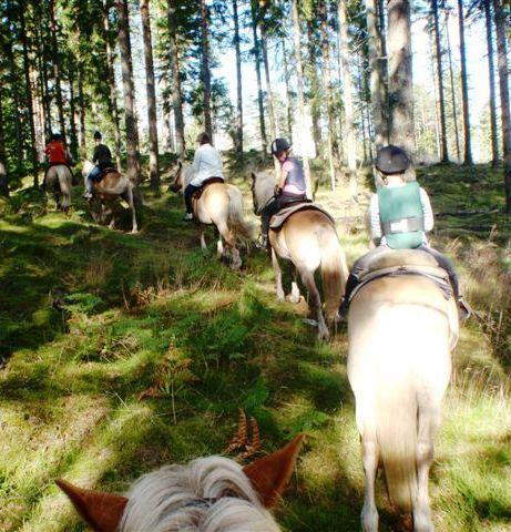© Stall Sonakull, Turridning på Haflingehästar hos Stall Sonakull
