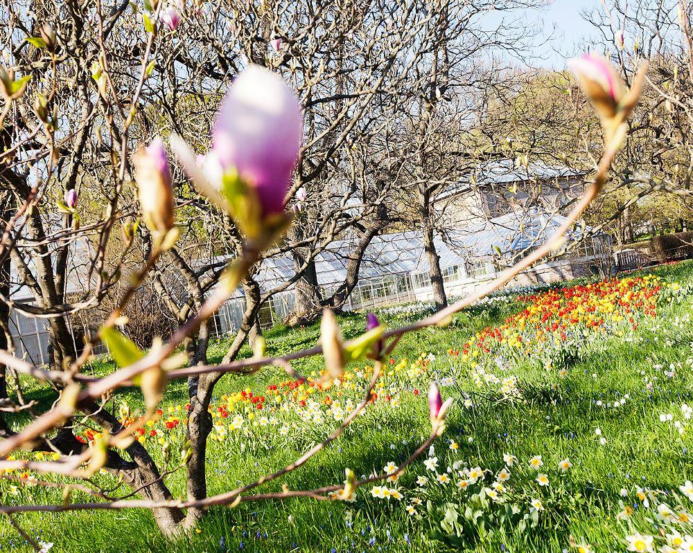 Lunds Universitets Botaniska Trädgård