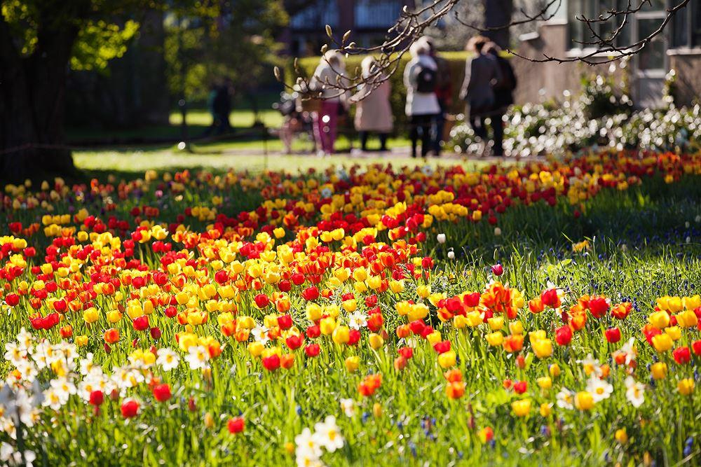 © Leif Johansson, Xrayfoto, Der Botanische Garten in Lund