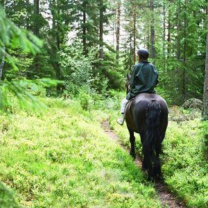 Elmerhults hästar