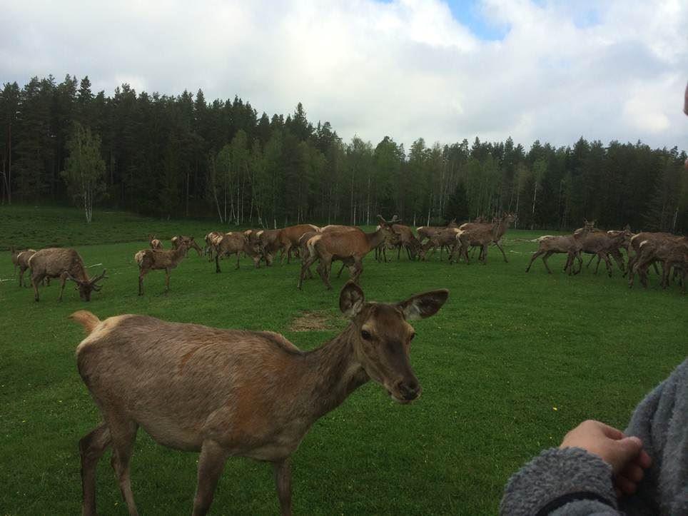 Skullaryds Älgpark