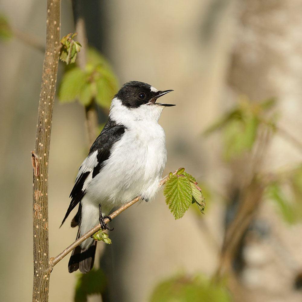 Wake up to birdsong.