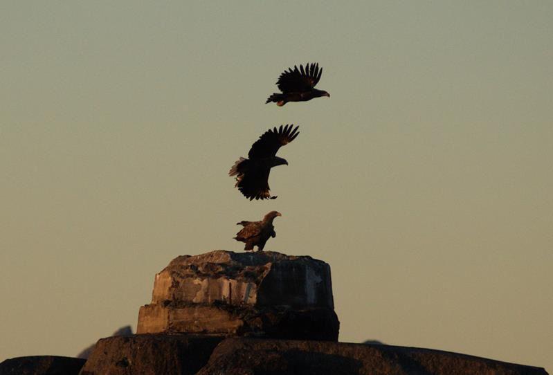 Eagle Safari in Vestbygd