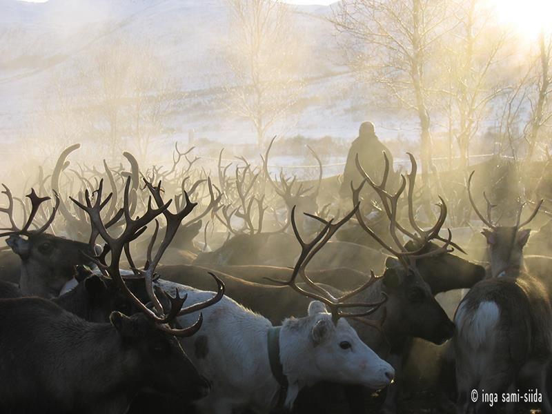 Samisk vinter - Inga Sami Siida